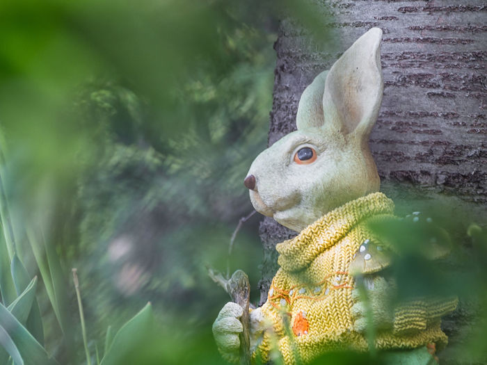 Close-Up Of Easter Bunny By Wall