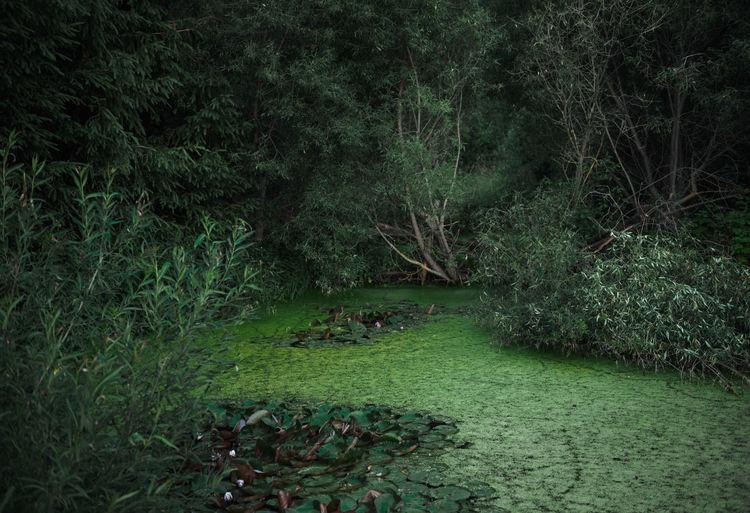 Swampfest Swamp