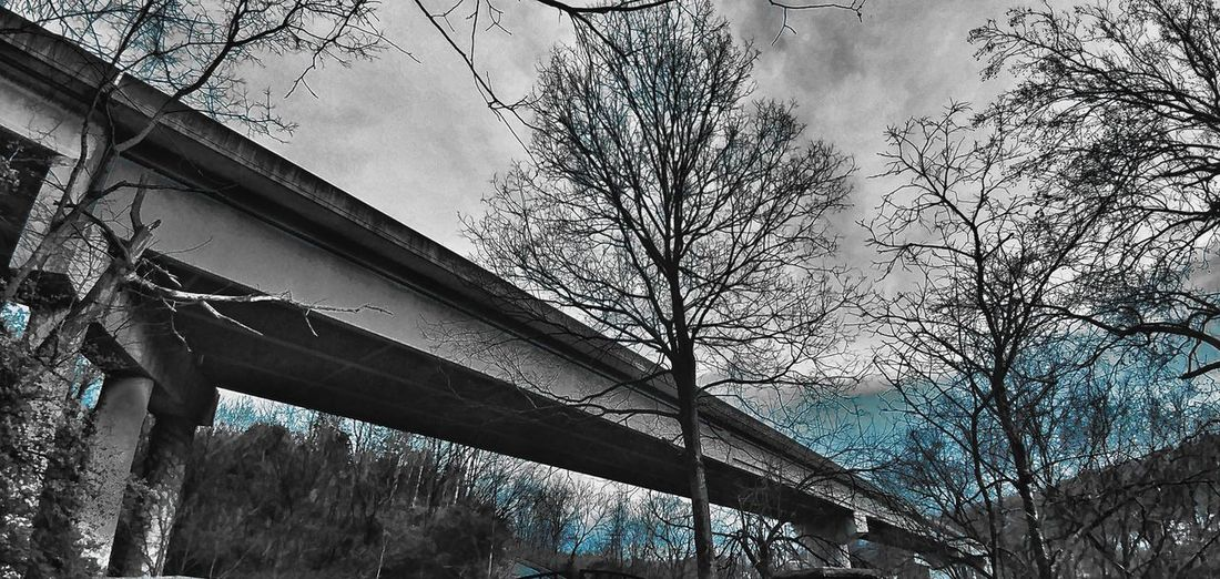 Tree No People Low Angle View Nature Outdoors Sky Concrete Overpass View. Kentucky  Fort Boonesborough St. Park EyeEmNewHere BYOPaper! Investing In Quality Of Life Lost In The Landscape Connected By Travel Black And White Friday Mobility In Mega Cities Colour Your Horizn Modern Workplace Culture The Great Outdoors - 2018 EyeEm Awards The Architect - 2018 EyeEm Awards