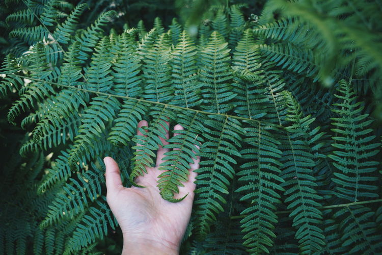 Beauty In Nature Close-up Day Fern Fragility Freshness Green Green Color Growth Hand Human Body Part Human Hand Leaf Leaves Nature One Person Outdoors Plant Touch Touching
