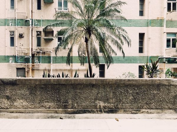 Minimalist Photography  Minimalism Minimal Building Exterior Architecture Palm Tree Built Structure Outdoors Tree Day