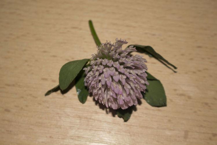 Flowers of