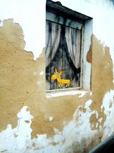Graffiti Hidden Gems  Yellow Dog  Window Street Photography