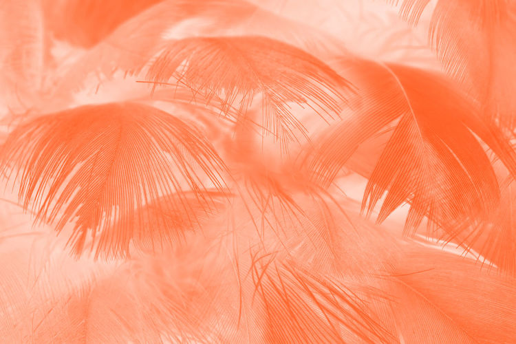 Beautiful lush lava orange-white colors trend feather texture background, trends color