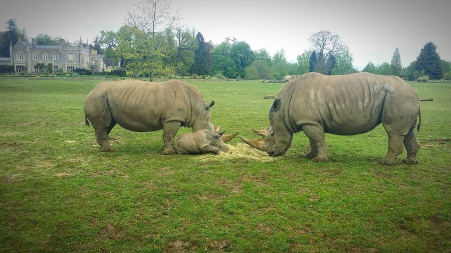 Rhino family love nature cotswolds