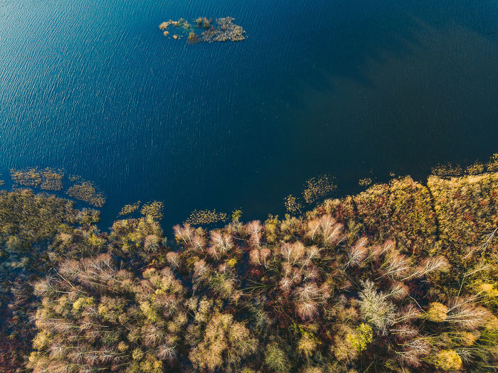 Forest in autumn Autumn Autumn Colors Drone  Trees Aerial Aerial View Beauty In Nature Day Drone Photography Forest Growth Mavic Mavic Pro Nature No People Outdoors Plant Tree Water