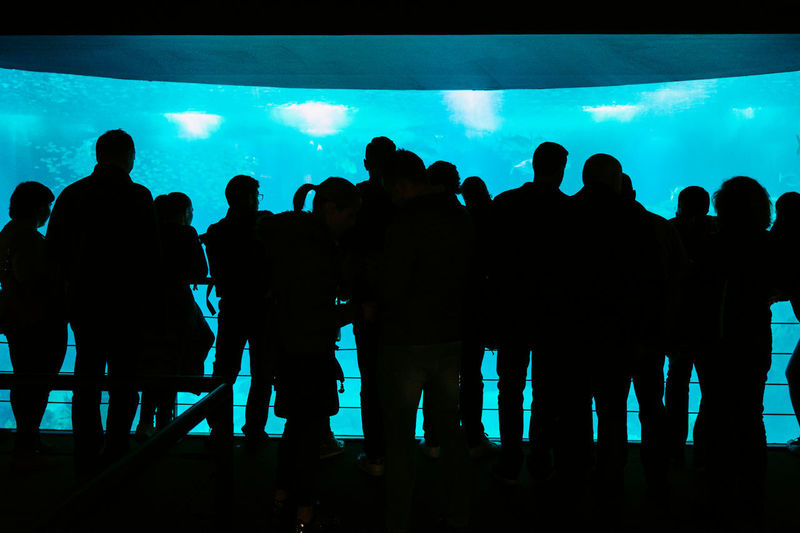 Arts Culture And Entertainment Audience Blue Crowd Day Enjoyment Expo 98 Fun Indoors  Large Group Of People Leisure Activity Lifestyles Men Nightlife People Popular Music Concert Real People Silhouette Sky Standing Togetherness Women Youth Culture