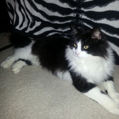 Cats Blackandwhite Kittys  Beautiful furry
