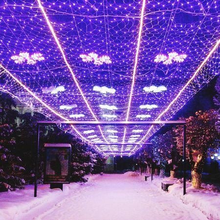 Winter's light Tree No People Snow Illuminated Uralsk