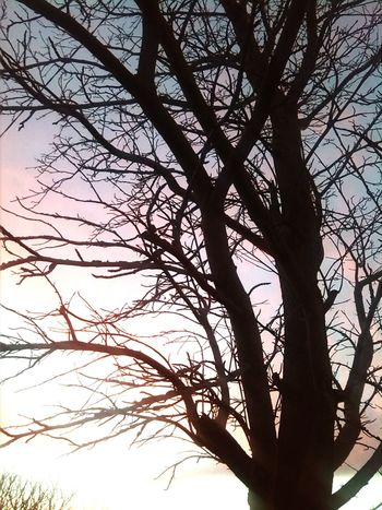 Tree Nature_collection Taking Photos Goodmorning Sunrise_Collection