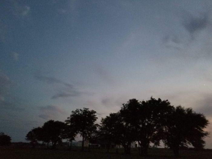 Tree Astronomy