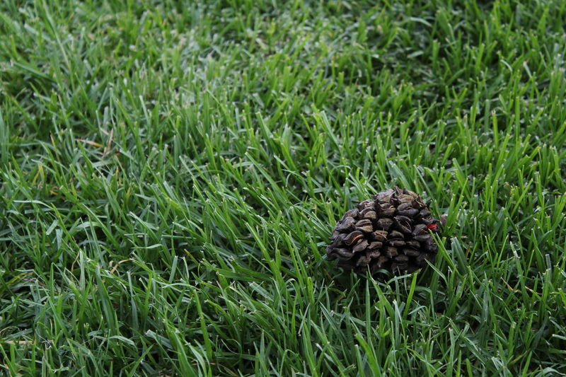 #Nature  #NewToThis #beginner... For Now #green #pinion Beauty In Nature Close-up Grass