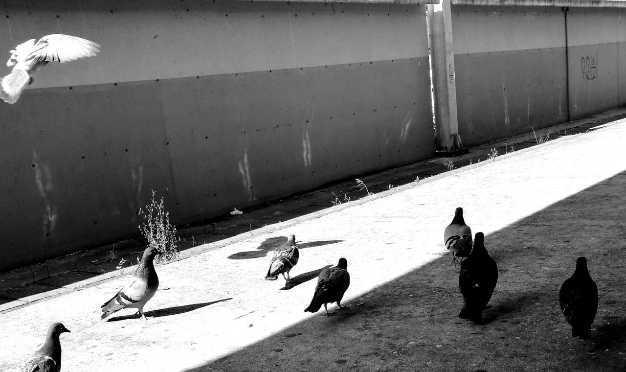 animal themes, high angle view, sunlight, shadow, bird, domestic animals, outdoors, day, no people, mammal, pets, nature
