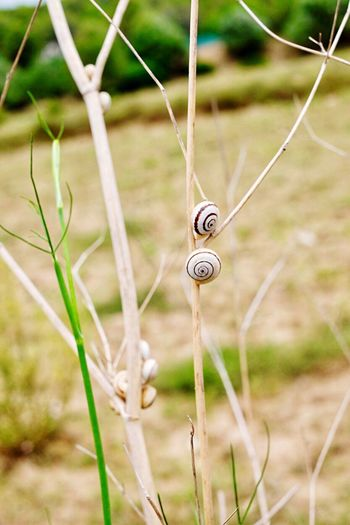 No People Snails Snail Day Focus On Foreground Close-up Outdoors Grass Nature Animal Themes