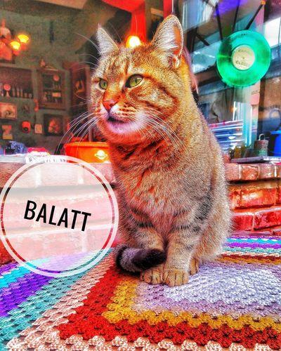 Balat İstanbul 🇹🇷 turkey's 🇹🇷 🌜 Watch Professional Turkey Bodrum Tatil Zmir Sony Foodphotography Istanbul Turkey Kedicik Fount Gezi