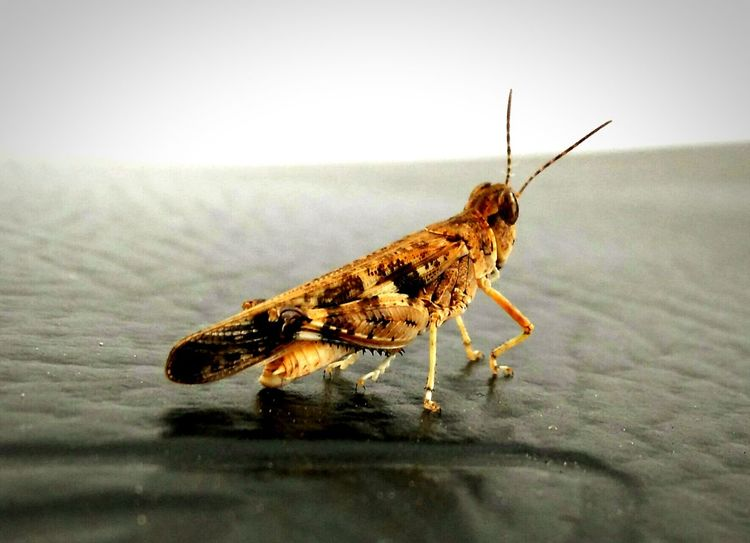 SmallGrasshopper Check This Out Smartphonephotography Focused Closeupshot Taking Photos