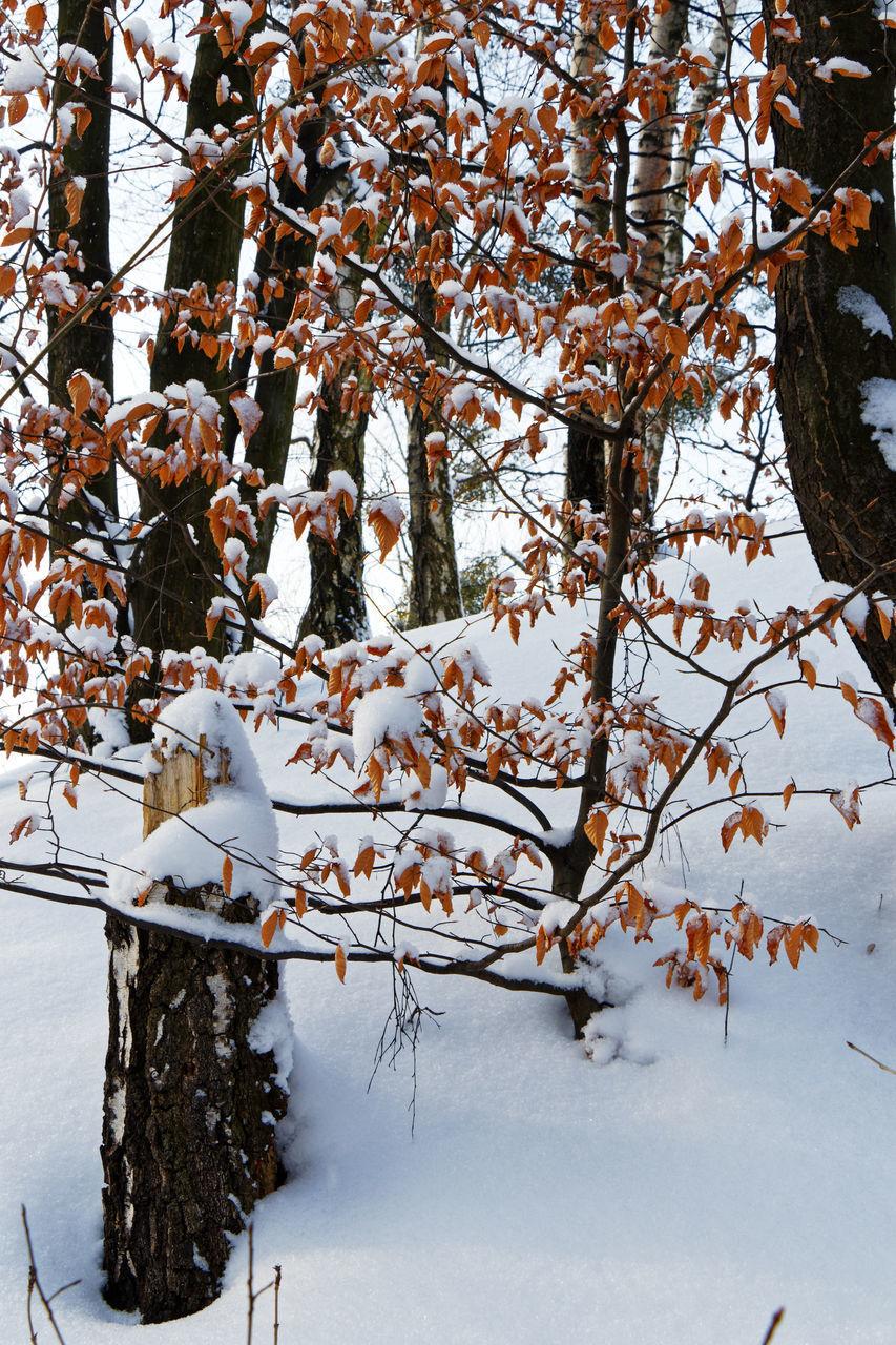 SNOW COVERED CHERRY BLOSSOM TREE