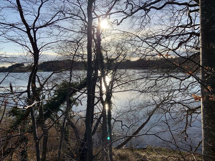 Bare trees by lake against sky in forest