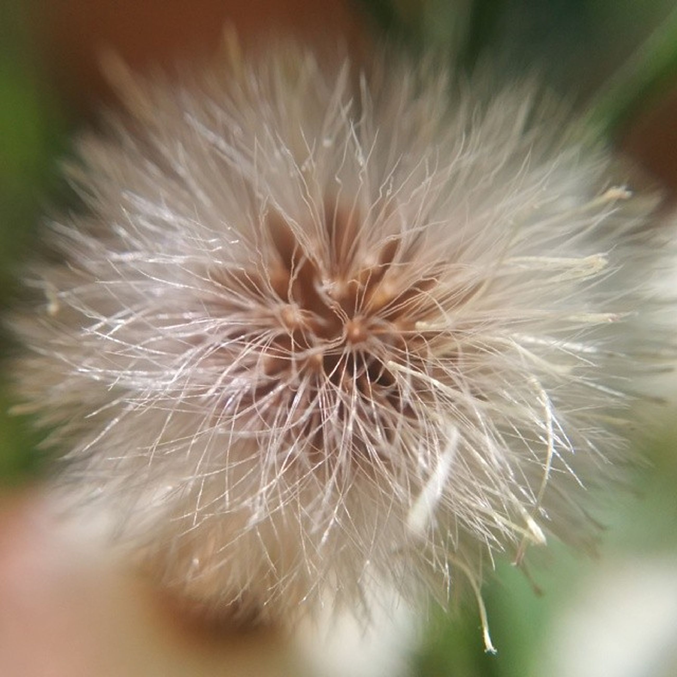 dandelion, flower, close-up, fragility, flower head, growth, single flower, focus on foreground, freshness, beauty in nature, nature, selective focus, softness, white color, wildflower, uncultivated, seed, plant, botany, dandelion seed