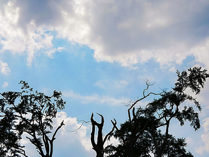 Trees after a heavy storm Storm Wind Power Beauty In Nature Branch Cloud - Sky Day Growth Idyllic Low Angle View Nature No People Non-urban Scene Outdoors Plant Scenics - Nature Silhouette Sky Storm Clouds Sunlight Sunset Tranquil Scene Tranquility Tree