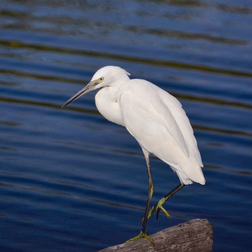 Close-Up Of Egret On Driftwood Against Lake