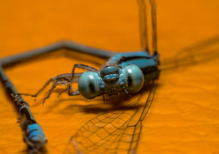 Close-Up Of An Insect Against Blurred Background