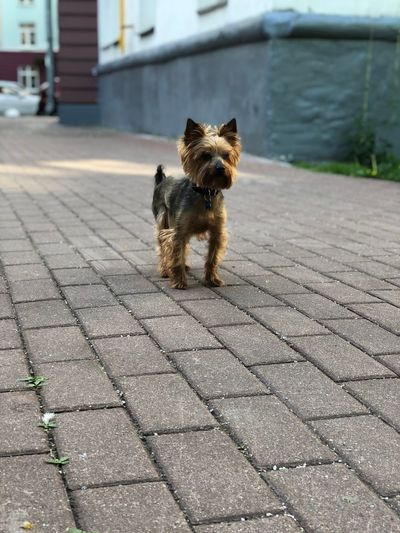 One Animal Animal Themes Animal Mammal Pets Domestic Domestic Animals Street City Sunlight Vertebrate No People Full Length Dog Canine Day Footpath Shadow Looking Outdoors