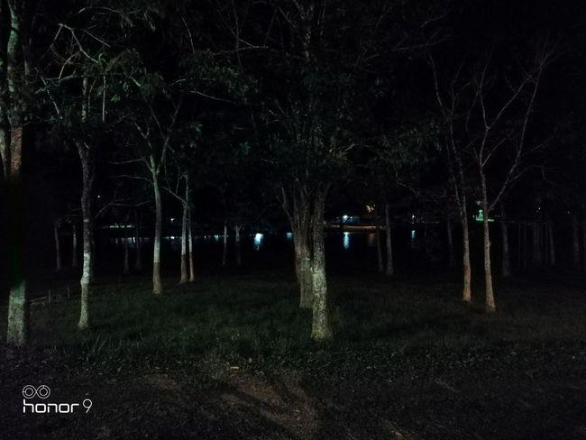 Teste automático 12 megapixels Tree Illuminated Black Background Spooky