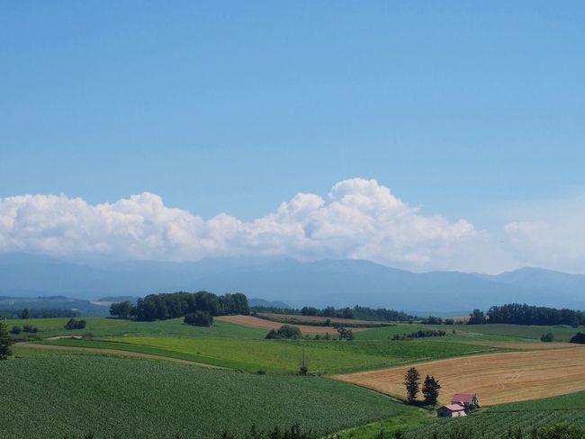 新栄の丘。Hills of Sin-ei. EyeEm Nature Lover Landscape Hokkaido Biei Hills