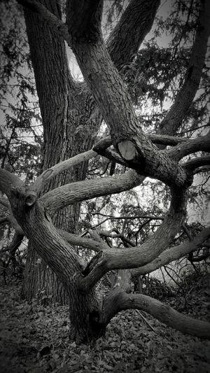 The Snake Tree