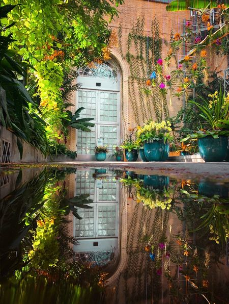Potted Plants Botanical Puddle Orchids Garden Reflection Tree Water Day Outdoors Architecture No People Plant Beauty In Nature