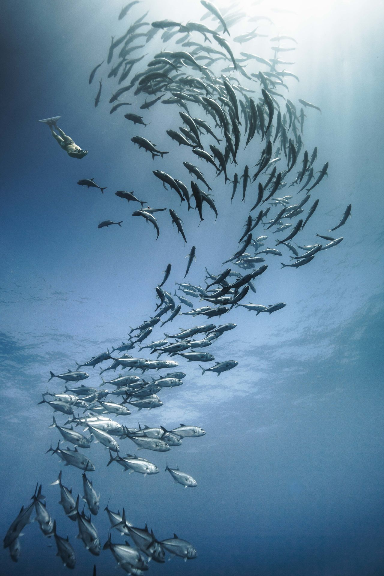 Low angle view of scuba diver and school of fish swimming in sea