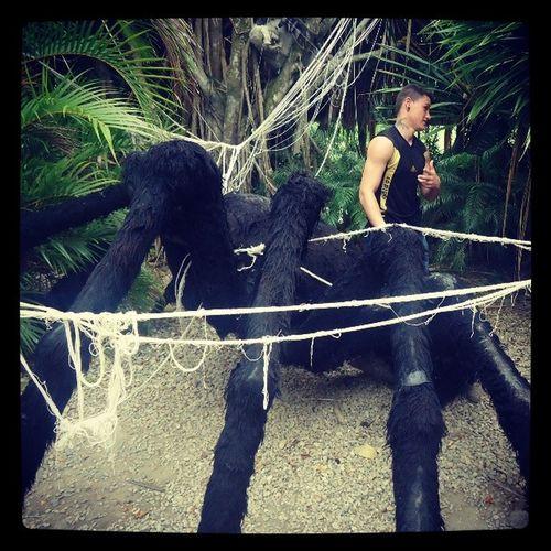 E aeê qual das aranha é mais loucaa..? Chapei