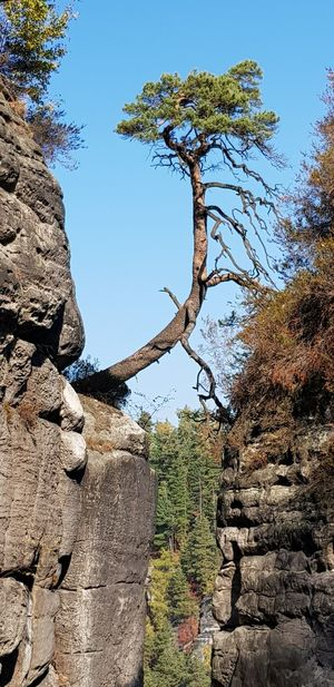 Elbe Sandstone Mountains No People Outdoor Photography Bastei Tree Branch Mountain Clear Sky Sky Plant Pine Tree