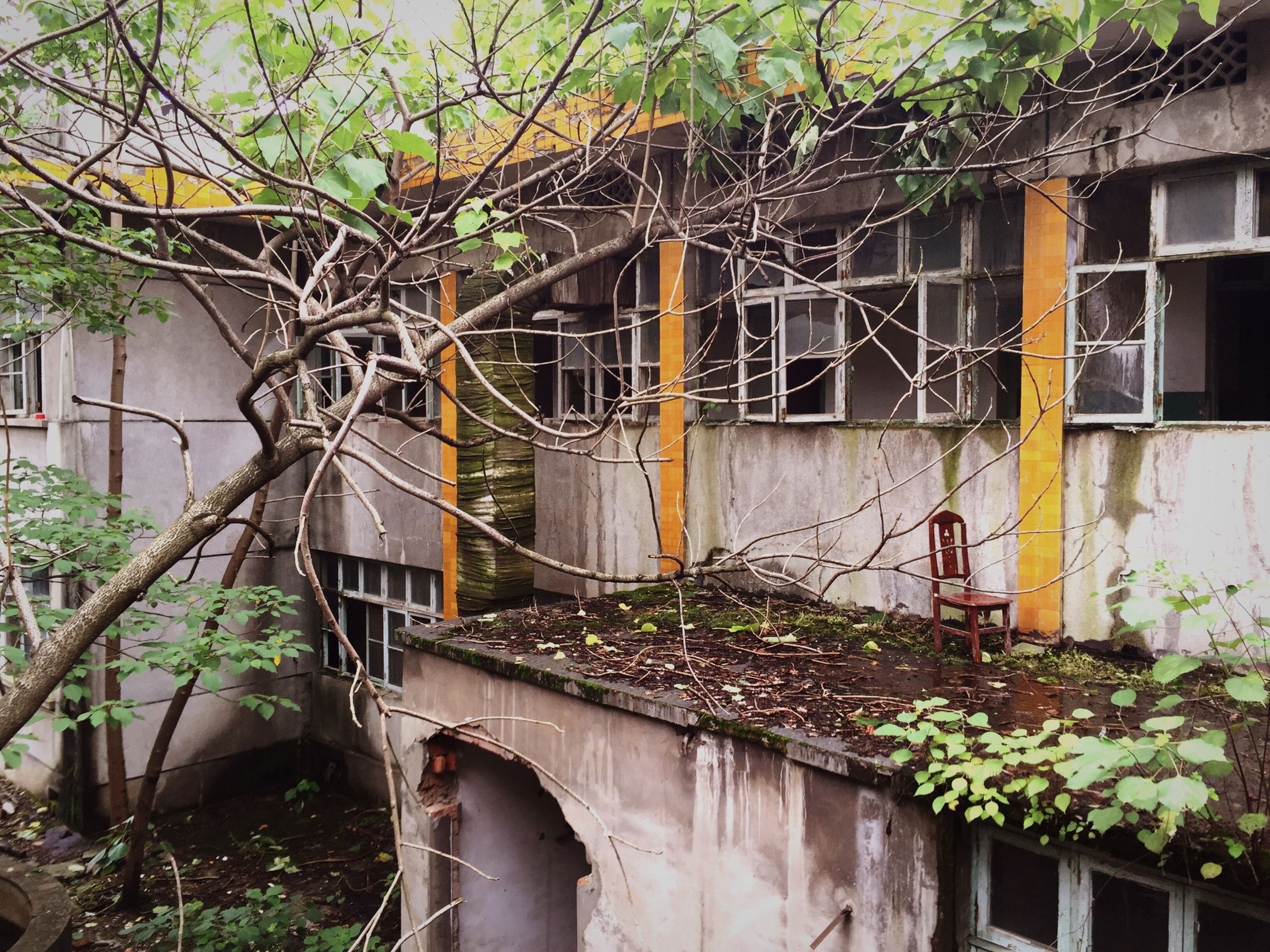 building exterior, architecture, built structure, house, plant, window, residential structure, residential building, growth, ivy, tree, creeper plant, building, potted plant, day, door, outdoors, no people, front or back yard, abandoned