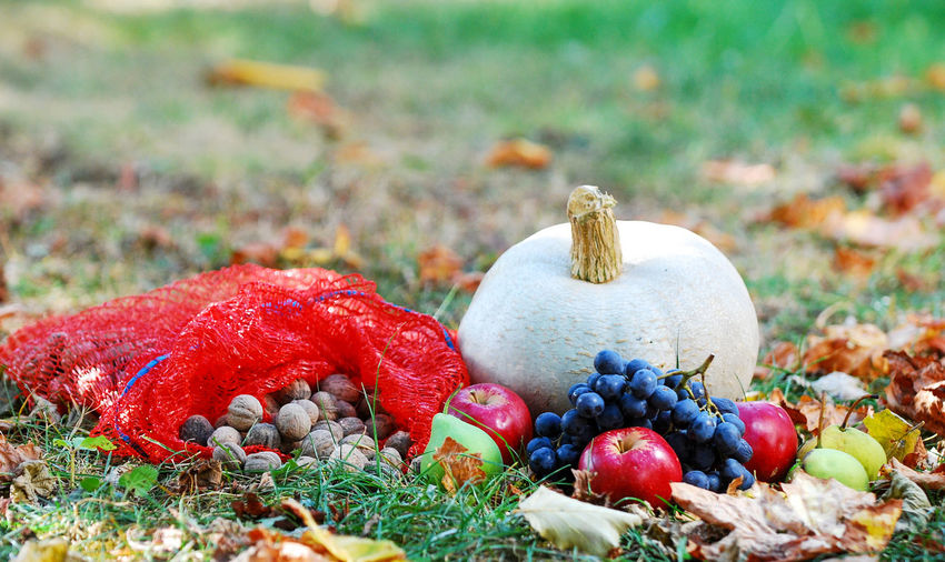 fall, autumn, october, fruits Plant Food Nature No People Land Day Field Close-up Outdoors Selective Focus Fall Autumn Pumpkin Grass Fruits Fall Fruits Haloween Apple Nuts Grape Pear Thanksgiving Decoration Fall Concept October
