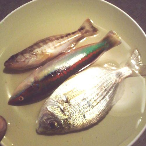 Seafood Fish Close-up Animal Fin