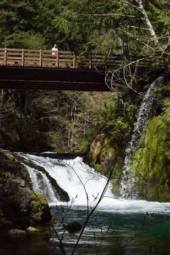 Jawbone Flats Opal Creek Trail Spring 2016 Outdoors❤ Taking Photos Oregonexplored Bridge - Man Made Structure