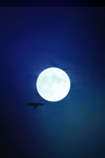 Airplane AntiM Astronomy Blue Blue And Black Clear Sky Flying Low Angle View Moon Moon And Bird Moon And Blue Skies Moon And Sky Nature Night No People Outdoors Sky