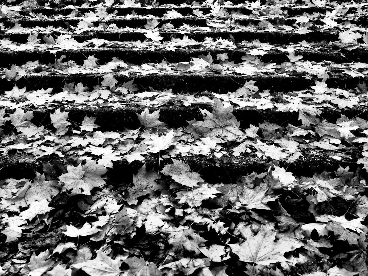 Close-Up Of Dry Leaves On The Ground
