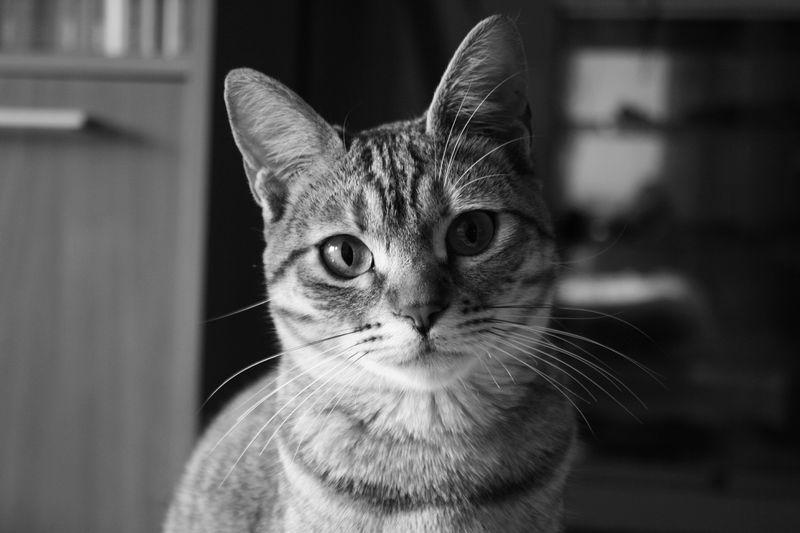 Love Photography Mylove Animal Hi! Cat Cheese! Canon Stella Blackandwhite