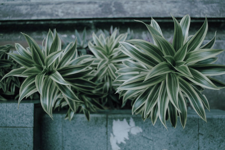 Close-up of potted plant in yard