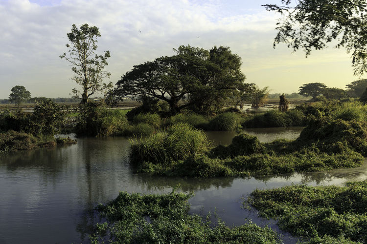 Burma Landscape