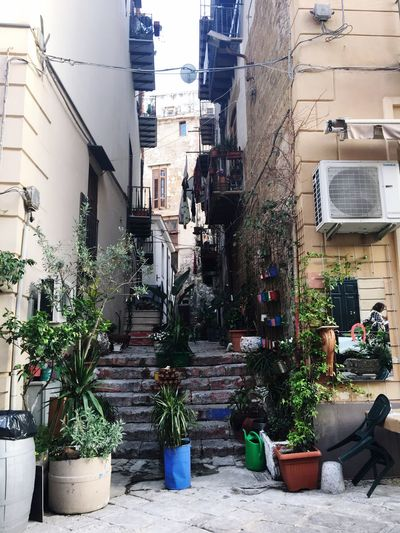 Beautiful City ~ Palermo, Sizilia Architecture Potted Plant Plant Day Building Exterior Built Structure Outdoors Growth City Nature No People Italy First Eyeem Photo