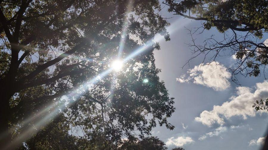 Shade Trees Treeshade Beautiful Day Blue Sky Sun The Great Outdoors - 2017 EyeEm Awards