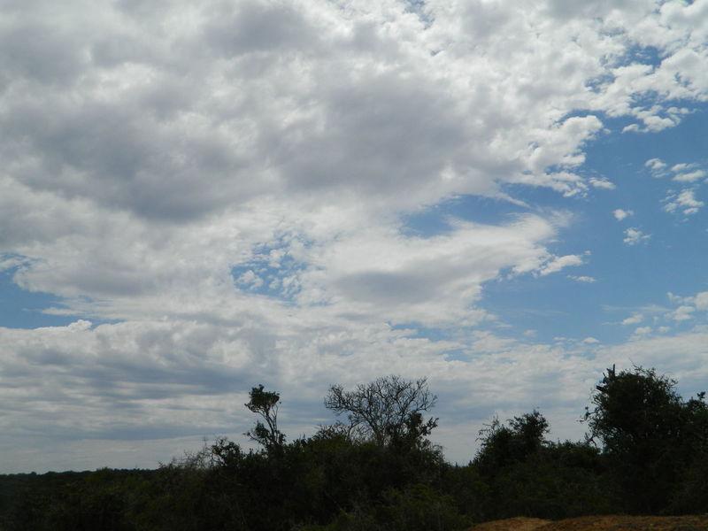 National Park Nature Photography Addoelephantpark Addo South Africa Tree Blue Sky Cloud - Sky Outdoors Nature Beauty In Nature Nature Scenics Landscape