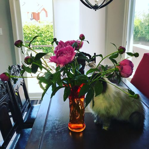 Poenies Bouquet Peonies Bloom In The Room Plant Window Flower Flowering Plant Indoors  Vase Decoration