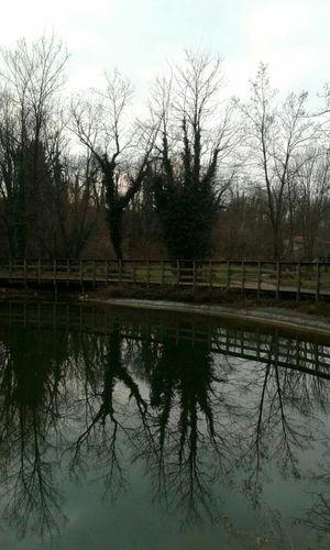 Lake Lake View Lakes  Riflectionswater Riflection Park At The Park Water Reflections