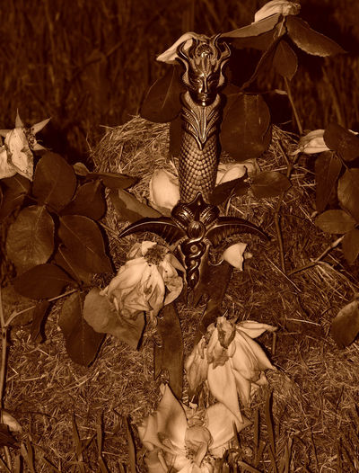 Athame Blade Ceremonial Blade Dead Roses Emotive Emotiveimagery Eye4photography  EyeEm Best Shots EyeEm Gallery Life & Death Life And Death Monochrome Monochrome _ Collection Monochrome Photography MonochromePhotography Religious Artefact Roses Sepia Sepia Mood Sepia Photography Sepia_collection Wicca  Wiccan