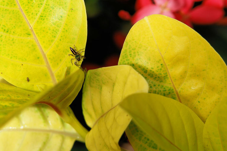 Beauty In Nature Close-up Day Detail Focus On Foreground Green Color Growth Leaf Leaf Vein Leaves Natural Pattern Nature No People Outdoors Plant SonyR1 Spider Yellow Nature's Diversities